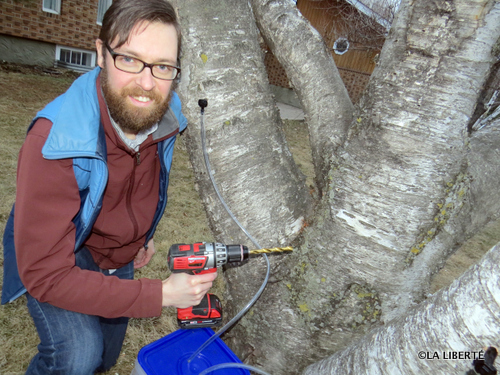 """Derrick Finch : « Quand je pense à tous les arbres du quartier qui peuvent produire du bon sirop, je me dis """"Quel gaspillage!"""" Les gens de la ville ne savent pas ce qu'ils manquent. »"""